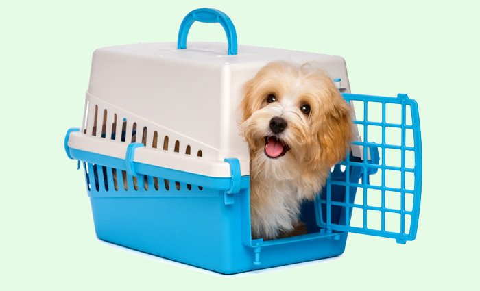 A Puppy Crate Is Needed If You Are Not Home