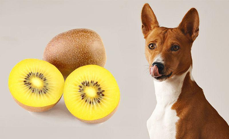 Dog with Kiwi