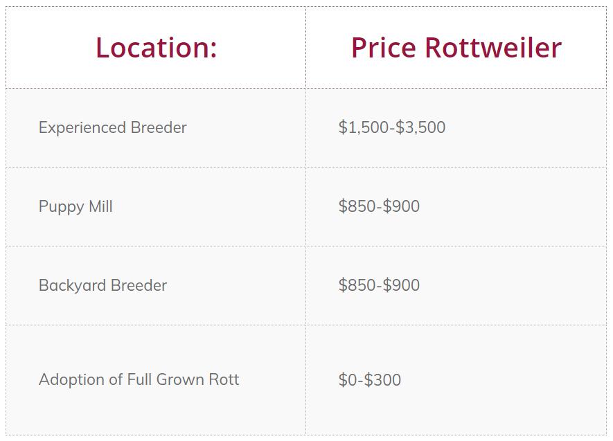 price Rottweiler