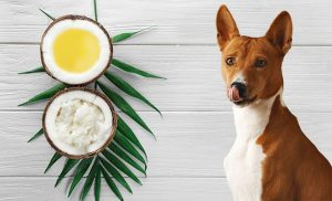 Dog eat Coconut Can Dogs Eat Coconut? Unlock All Wonders!