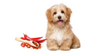 """Have You Ever Wondered """"Can Dogs Eat Spicy Food"""""""