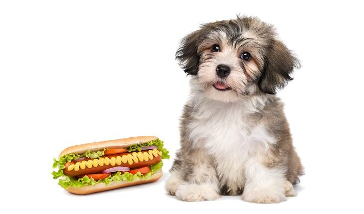 Can Dogs Eat Hot Dogs