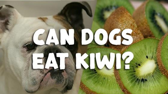 Can dogs eat kiwi?
