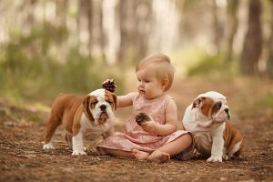 Cute little baby with two English bulldog puppies playing