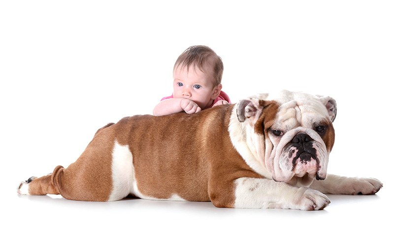 baby and dog - 3 month old baby with 4 year old english bulldog