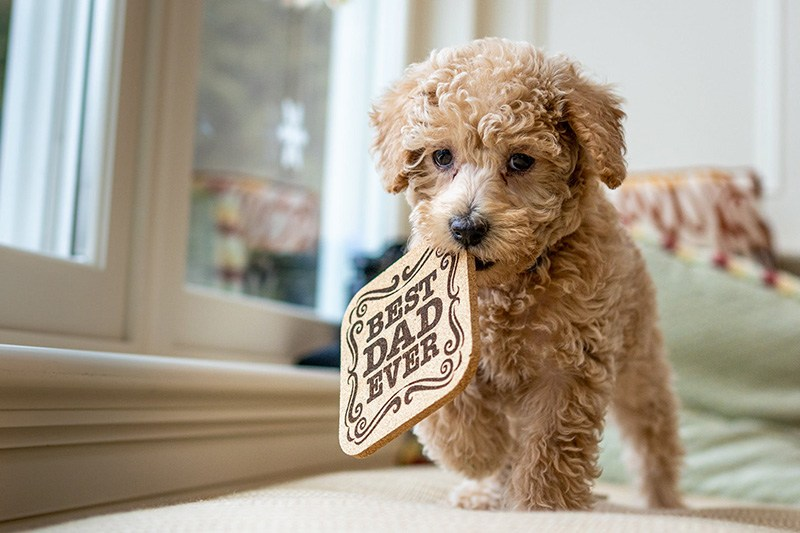 Can Labradoodles Be Left Alone