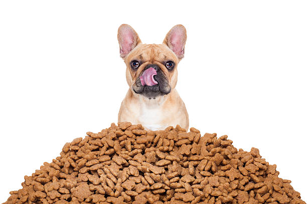 French Bulldog with processed foods.