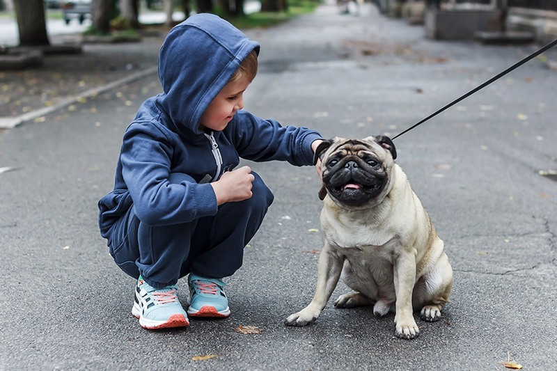 Happy boy walks on the street of the city with a pug