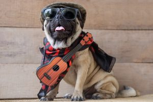 Why Are Pugs So Expensive?