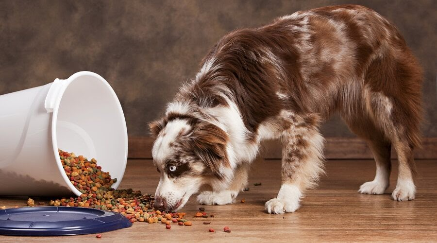Choosing the right food for your Australian puppy