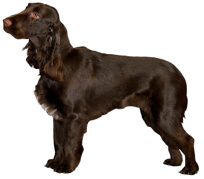 What Is The Cheapest Dog Breed