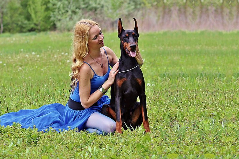 A Doberman and its master