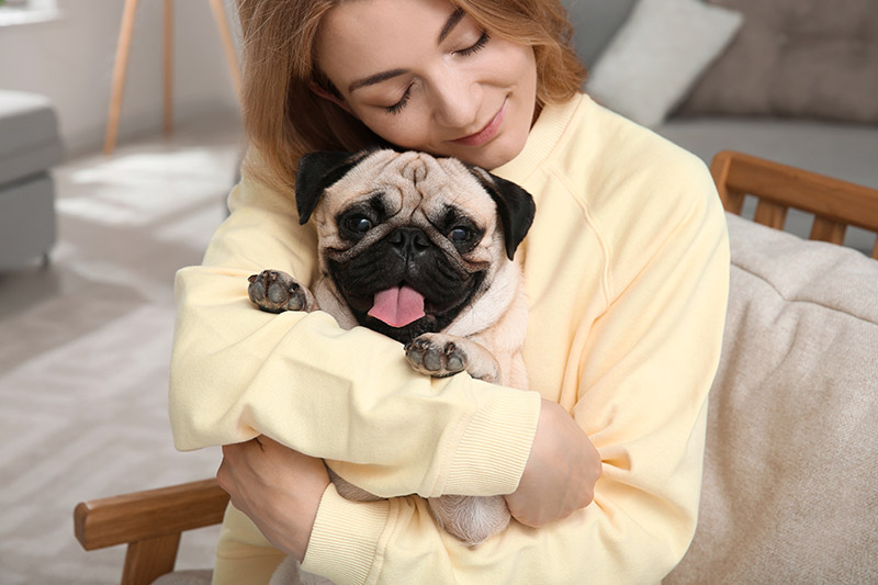Are Pugs Good House Dogs