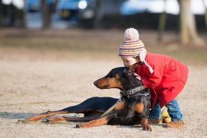 Do Dobermans Turn On Their Owners?